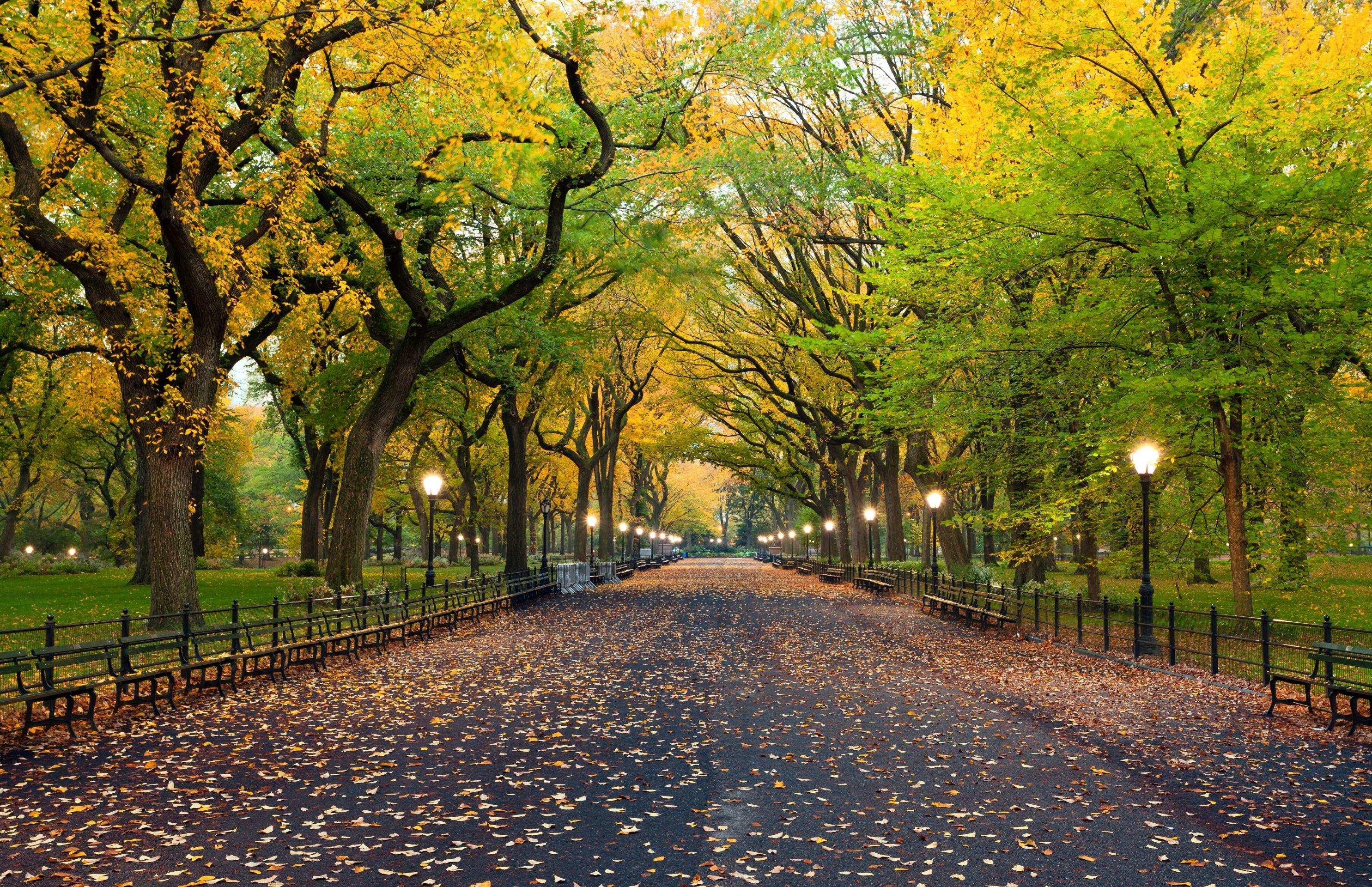 เซ็นทรัลพาร์ก ธรรมชาติที่ลงตัวกลางนิวยอร์ค